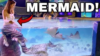 MERMAID ENCOUNTER AT LOCAL SEAQUARIUM!