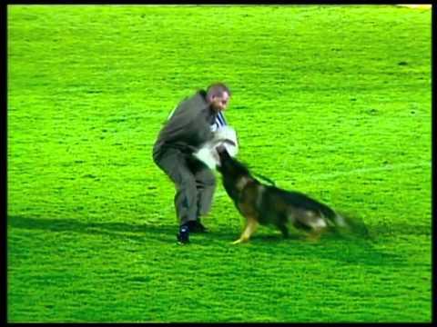 Dog Channel TV is working on the WUSV-WM 2012 (Austria, Steyr)