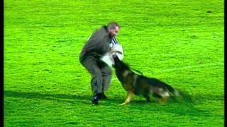 Baixar Dog Channel TV is working on the WUSV-WM 2012 (Austria, Steyr)