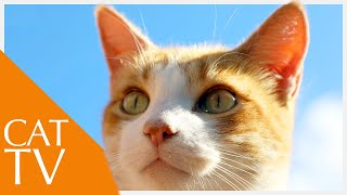TV For Cats! Relaxing Music and Nature Footage Video For Cats - NEW