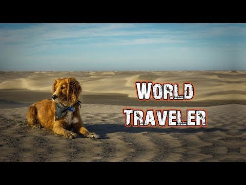 STREET DOG TURNS WORLD TRAVELER  // Hasta Alaska // S04E02