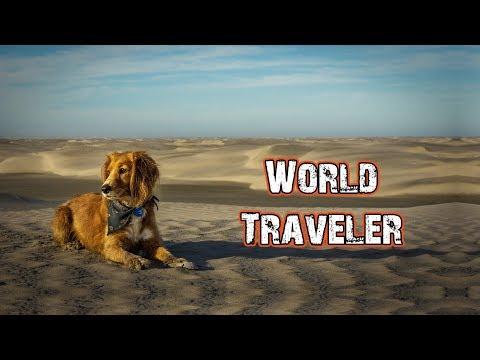 TRAVEL DOG, LUCKIEST PUPPY EVER! - Hasta Alaska - S04E02