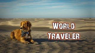 STREET DOG TURNS WORLD TRAVELER
