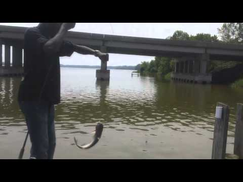 Virginia Series- Catfishing The Rappahannock River
