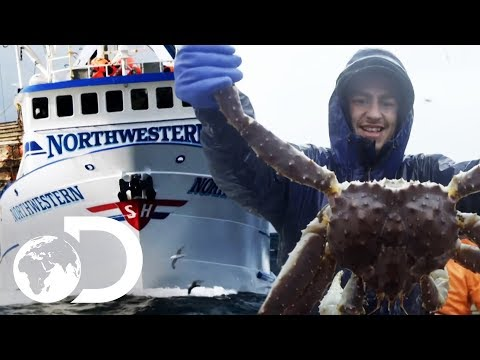 Northwestern's King Crab Season So Far | NEW Deadliest Catch