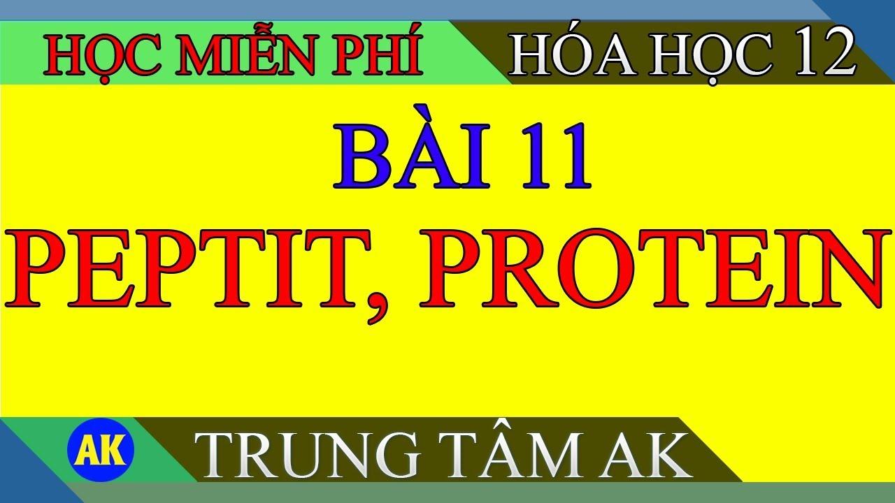 HOÁ HỌC 12:  BÀI 11 PEPTIT VÀ PROTEIN ( giải bài tập trong sách )