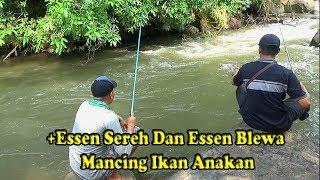 Mancing Ikan Anakan Dengan Umpan Roti Campur Essen Serreh Dan Blewa thumbnail
