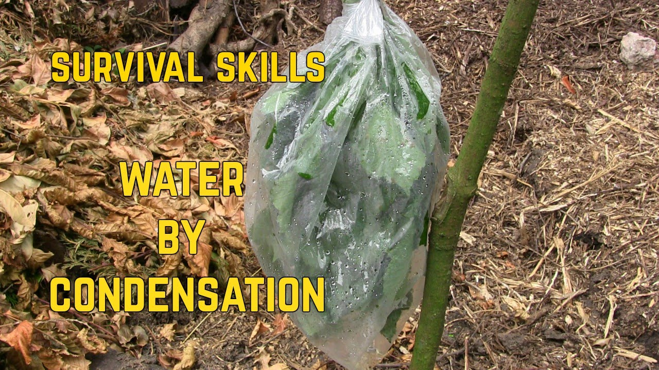 How to Collect Water From Plants picture