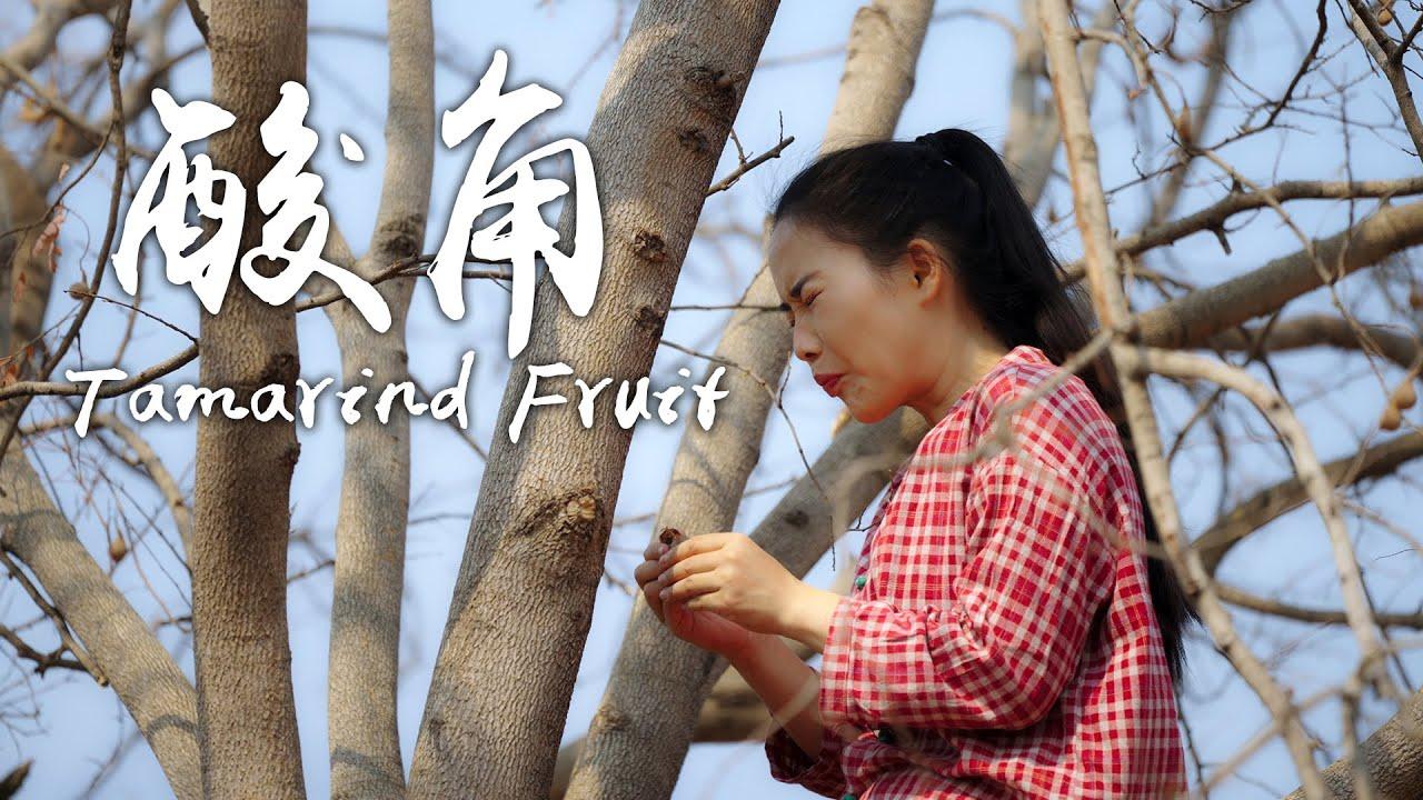 「一席一果」酸角——云南酸味最独特、水份最少的水果【滇西小哥】