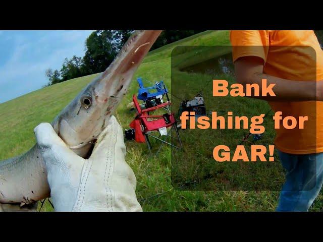 Bank Fishing For Gar