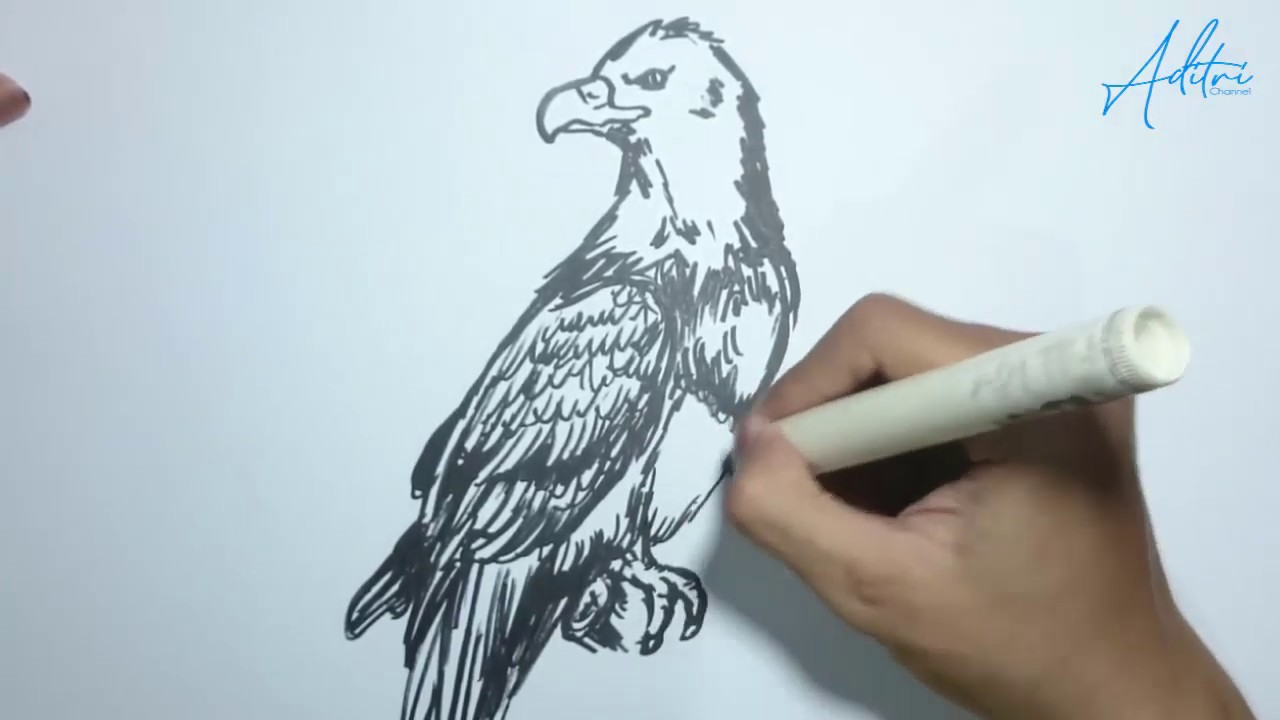 83 Gambar Burung Elang Keren Terbaik