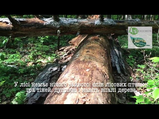 Forest forerver 9