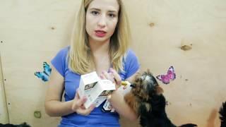 Как глистогонить собаку / препараты от глистов для собак