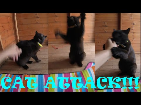 CAT ATTACK!!! Fluffy... The World's Worst Cat!!!