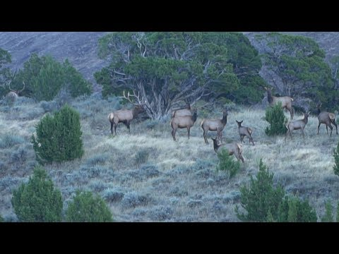 LAST DAY OF 2017 IDAHO ARCHERY ELK HUNT - EP 41 - LAND OF THE FREE