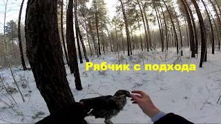 Охота на рябчика зимой 2019