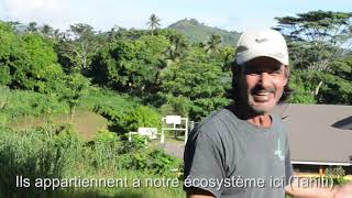 natural farming / agriculture naturelle