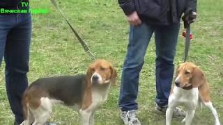 Областная выставка охотничьих собак новосибирской области.