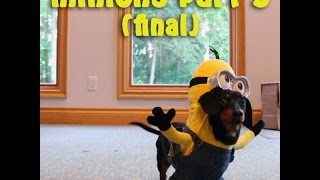 Dachshund Minions - Part 3 & Final