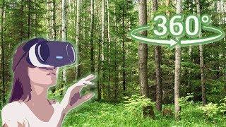 Панорамное Видео 360 Vr 4k для очков виртуальной реальности Прогулка по лесу. Релакс.samsung Gear360