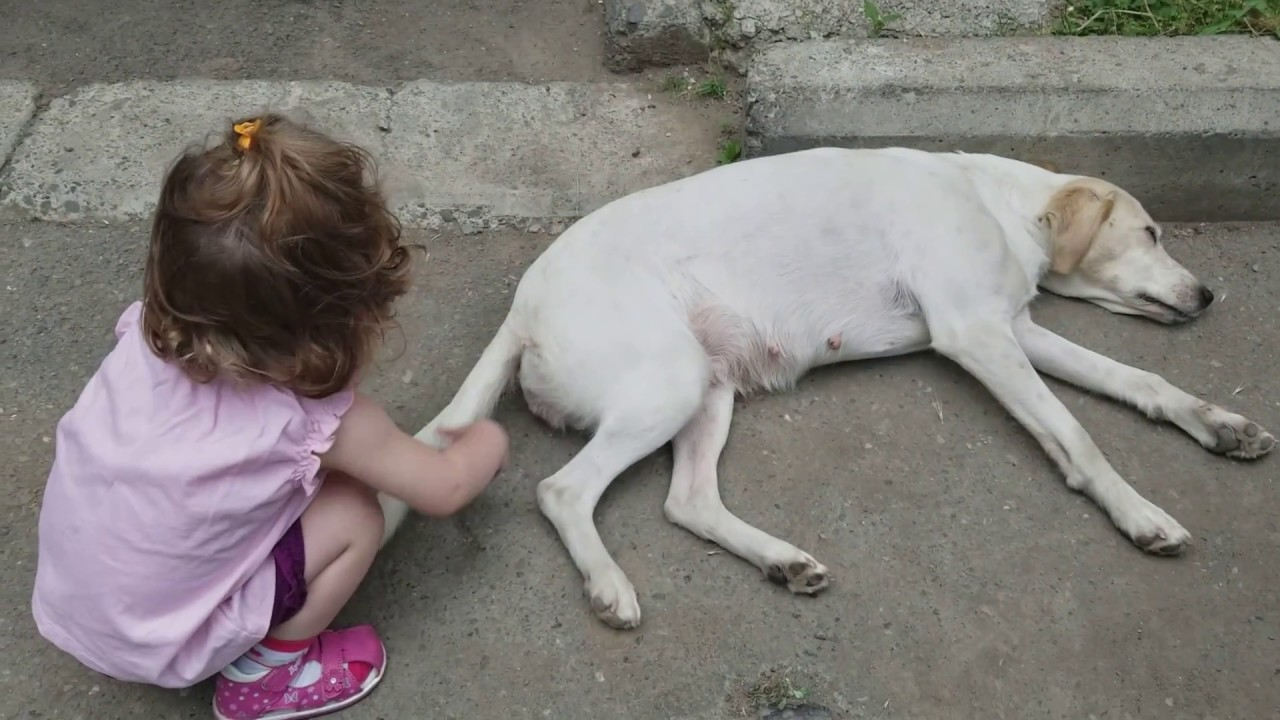 Cute BABY Lile Playing with Dog's Tail - Funny babies and dogs