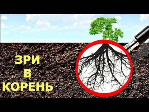 Настоящая ЖИВАЯ почва  РИЗОСФЕРА без мистики