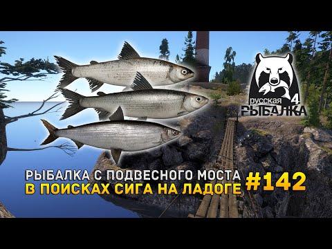 Рыбалка с подвесного моста. В поисках Сига на Ладоге - Русская Рыбалка 4 #142