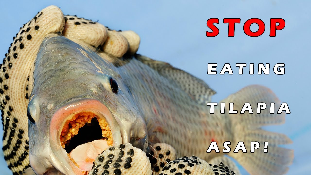Tilapia is bad for your health read about the sickening for Why fish is bad for you