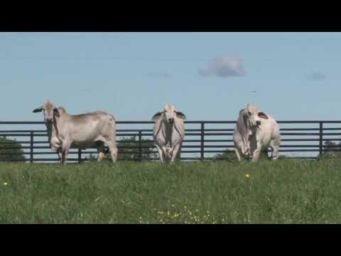 Paquian 95/5  - Bulls Eye Ranch