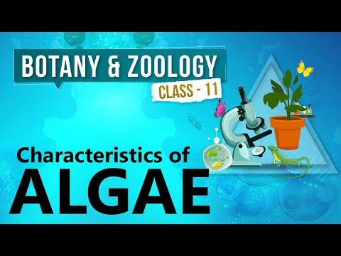 Characteristics of Algae - Kingdom Plantae - Biology Class 11