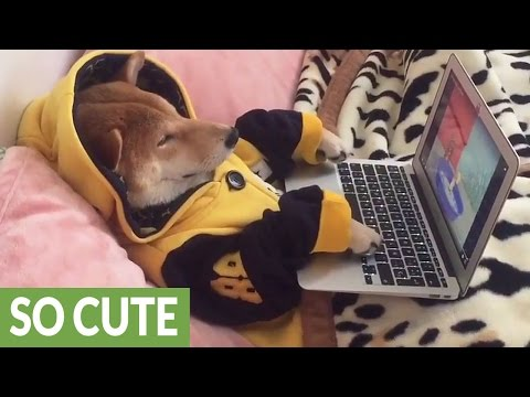 Dog chills out by watching cartoons on laptop