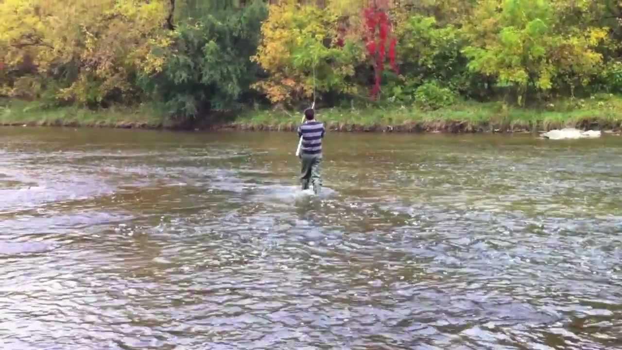 Salmon Fishing Humber river ( Toronto ) - YouTube
