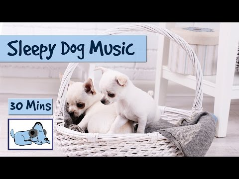 Sleepy Dog Music! Watch Your Dog Fall Asleep to our Music!