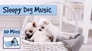 Sleepy Dog Music! Watch Your Dog Fall Asleep to our Music!
