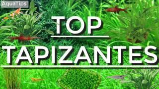 Top 5 plantas tapizantes fáciles para principiantes || AquaTips