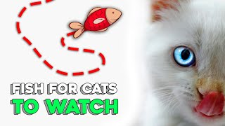 Fish for Cats to Watch (new game 2020)