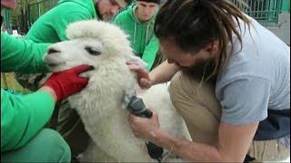 Известный парикмахер сделал прически животным из «Роева ручья»
