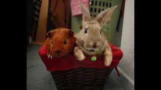 Лучшие Приколы про животных | Подборка самых смешных видео про животных #3