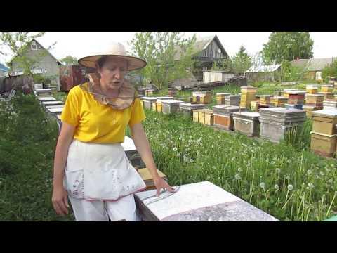 Как сделать отводок из пчелиной семьи видео