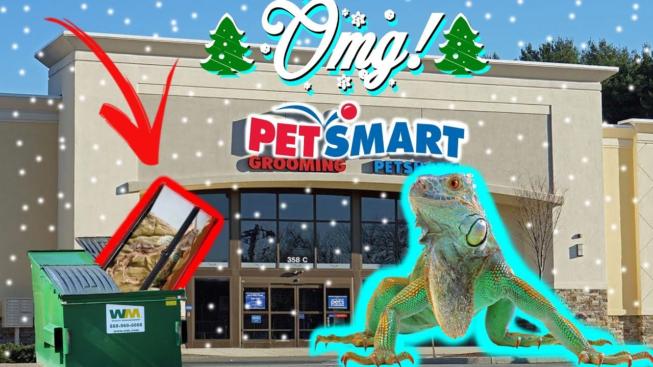 Petsmart Christmas Eve Hours.Found 300 Reptile Tank Tons More Petsmart Dumpster Diving Christmas Eve Special