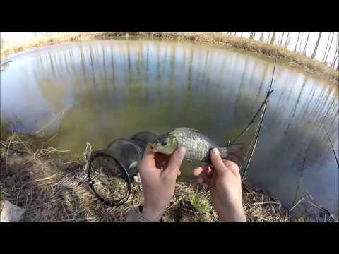 ловить карася по весне бери  пруду