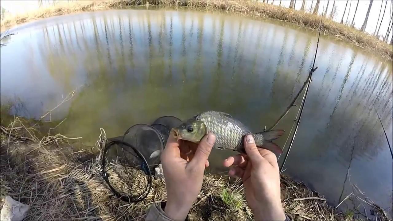 видео о рыбалке на закидушку