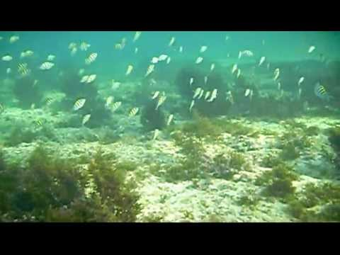 Exotic Fish Upper Gulf of California Sea of Cortez