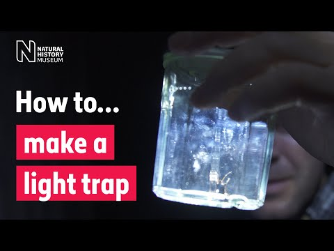 How To Make A Light Trap | Natural History Museum