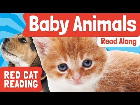 Baby Animals | Level Reading | Books Aloud | Made by Red Cat Reading