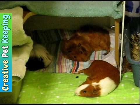 Guinea Pig Closet Cage Creative Cage Idea Youtube