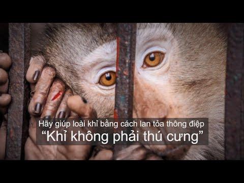 Khỉ không phải thú cưng!