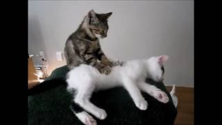 funny cats reggae music video clip