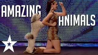 5 Amazing Animal Performances on Got Talent