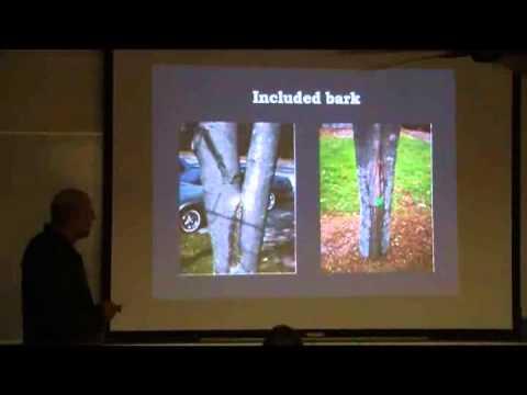 HI DOT Landscape Ch 06 Pruning Trees 01252012